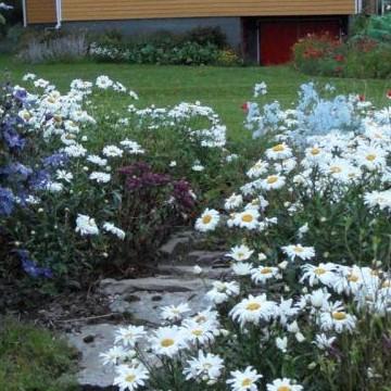 Sillankorvan puutarha