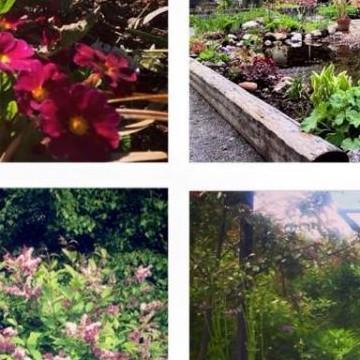 Sandras trädgård