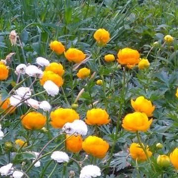 Kukkiva piha Laaksolahdessa