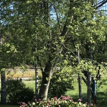Puutarha Luoma