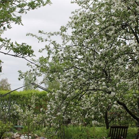 Lenan ja Juhan puutarha