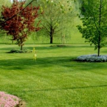 Paulas och Artos trädgård