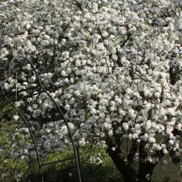 Syrjäkadun Kukka ja Kurpitsa