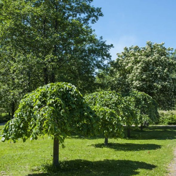 Pajalahden puisto