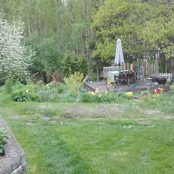Trädgårdsmästare Koskinens trädgård