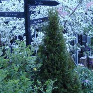 Timo och Mari Pursios trädgård