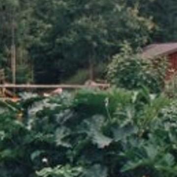 Markkina-aho bondgård