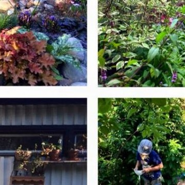 Sandran puutarha