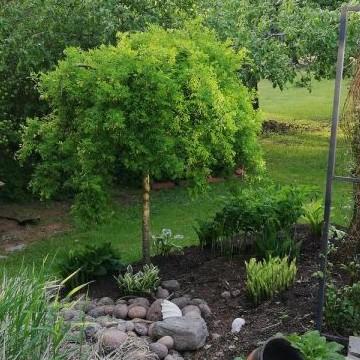Rönsyilevä puutarha