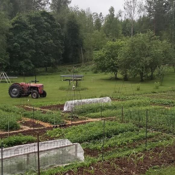 Blåa Husets grönsaksland
