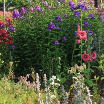 Reettas trädgård