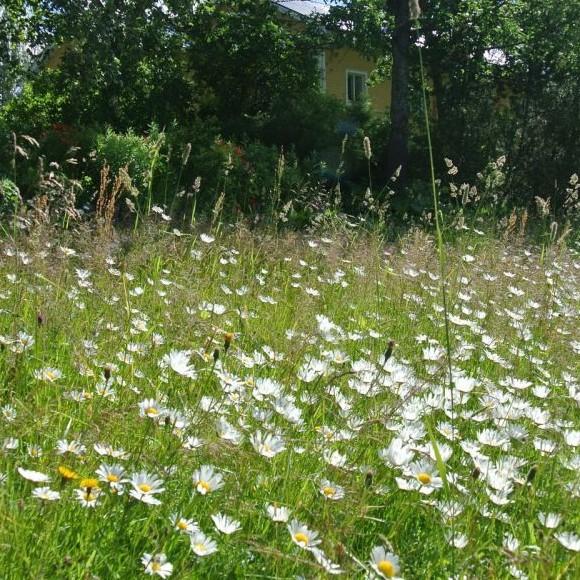 Koljolan puutarha