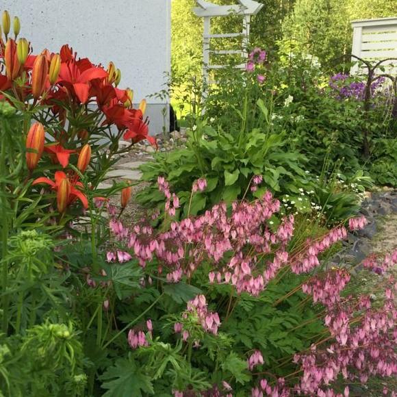 Marin Trädgård