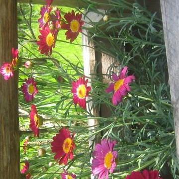 Päivi Ojanens trädgård