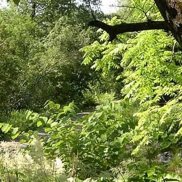 Tammisto Arboretum