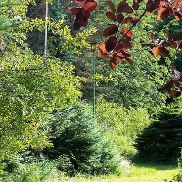 Feliks Riikonens Arboretum