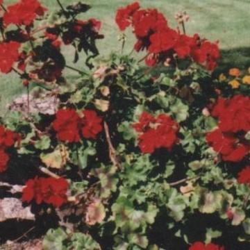 Perilän puutarha