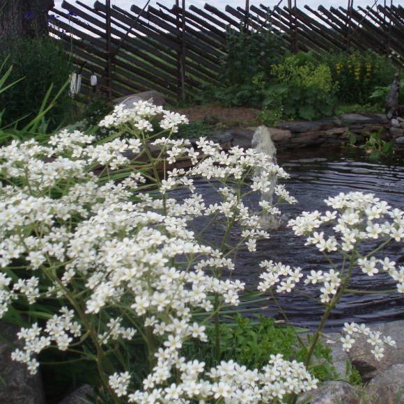 Mäntyhovin puutarha