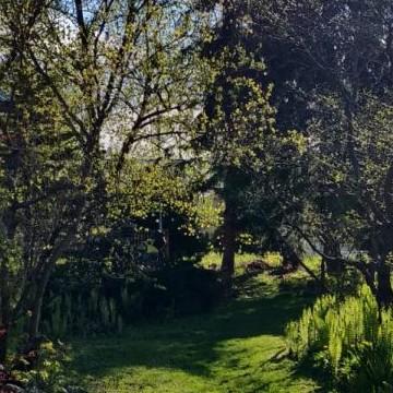 Suutarinpajan puutarha