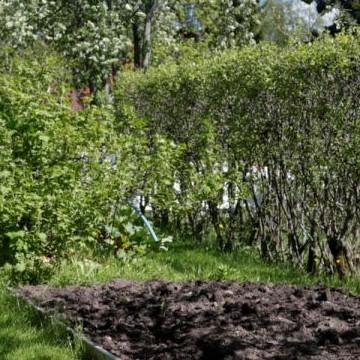 Sylvis trädgård