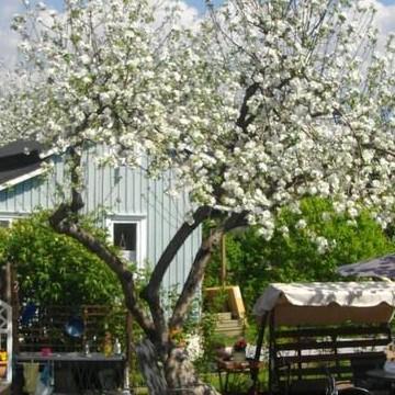 Litukka koloniträdgård