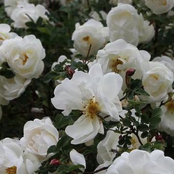 Milla Lehtosen puutarha