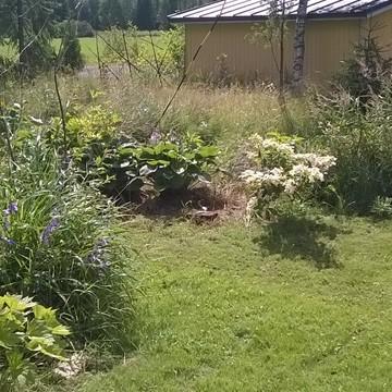 Jennin Aina keskeneräinen puutarha