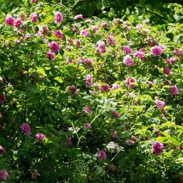 Tikkalan puutarha
