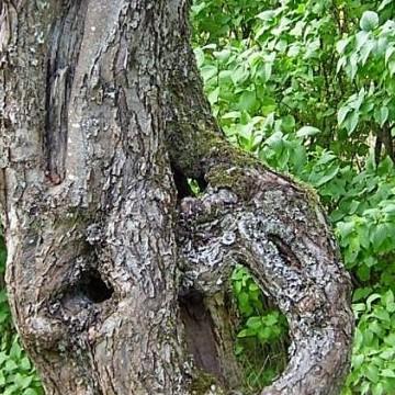 Kuusiston Kartanopuutarha
