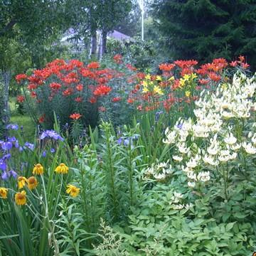 Hannele Simonens trädgård
