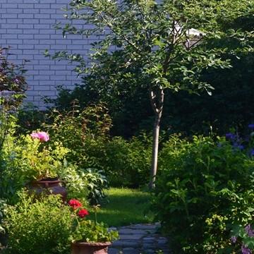 Lisbethin puutarha