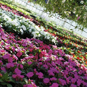 Sunds Trädgårdscenter