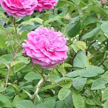 Gunilla Wester-Lehtos trädgård