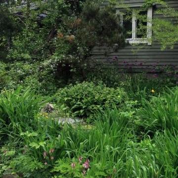 Purorinne trädgård