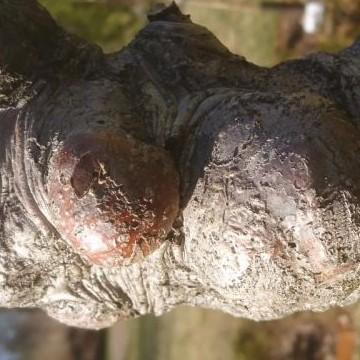 Puutarhakoulu
