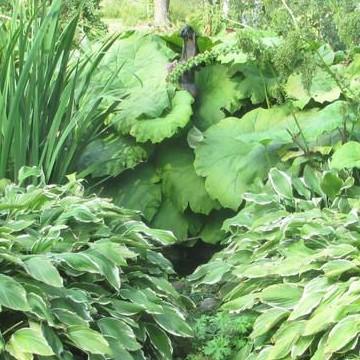 Jokilahden Puuhamaa