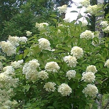 Hortus Munsmoensis