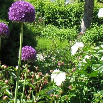 Caritas trädgård