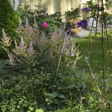 Missys trädgård