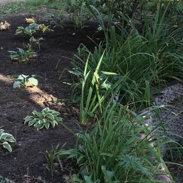 Tallbacka Trädgård